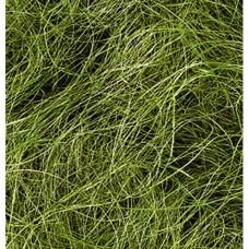 Sisal vlákna Zelená