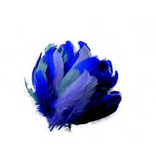 Husacie pero Modré