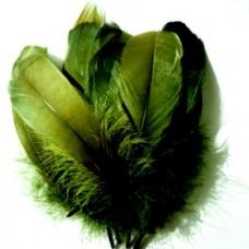 Husacie pero Zelené tmavé