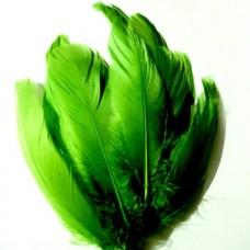 Husacie pero Zelené